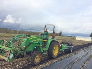 Drew Scheindler uses a manure spreader to amend a dormant row of balsamroot, the Taylor's checkerspot butterfly's favorite nectar plant. Photo credit: Jessika Blackport