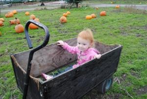 gardening kids olympia