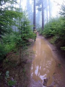 trail running olympia