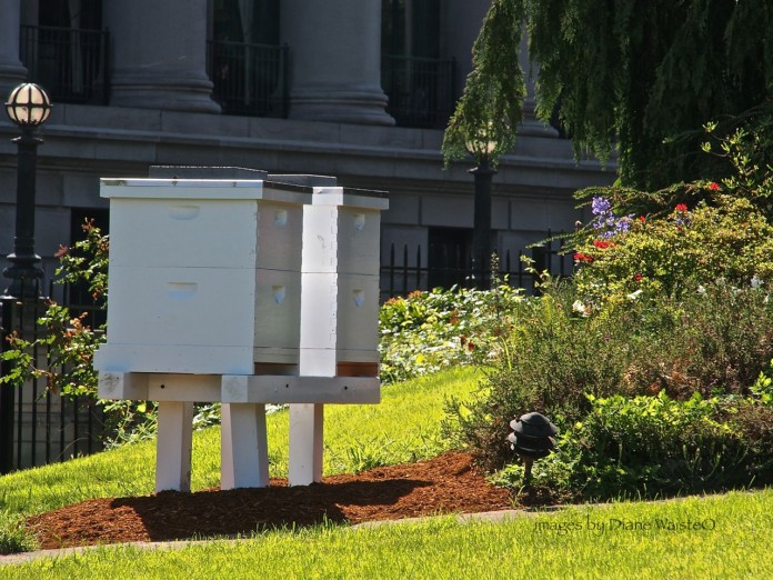 bees public land