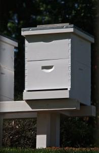 olympia beekeepers association
