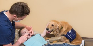 therapy dog dentist