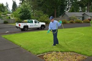 lawn treatment olympia
