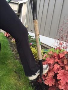 avoid back pain garden