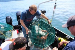 hood canal shrimp