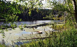 lake lucinda