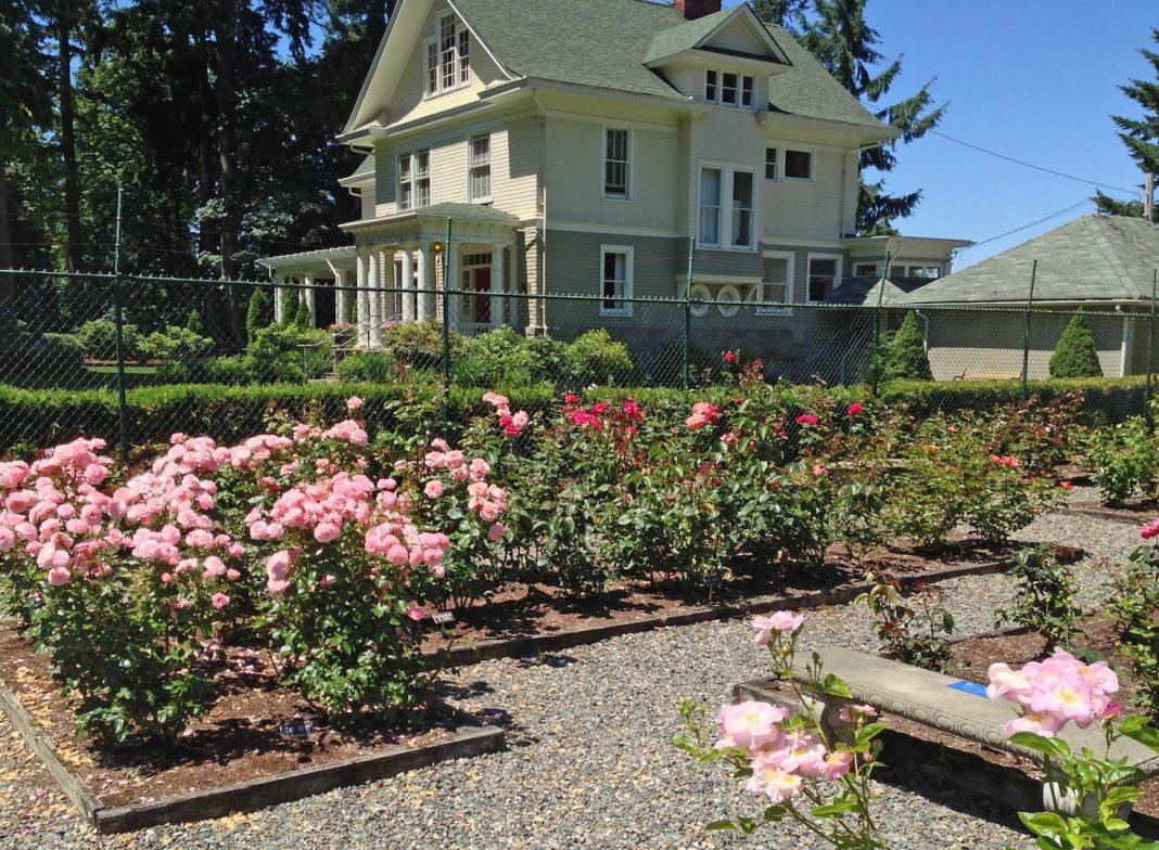 rose garden olympia