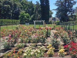 olympia rose garden