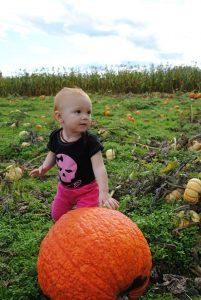 olympia pumpkin patch