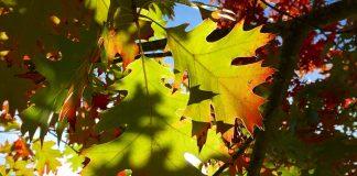 capitol lake fall scenic leaves