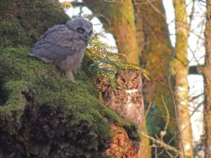 nisqually wildlife refuge
