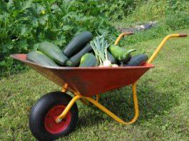 olympia gardening