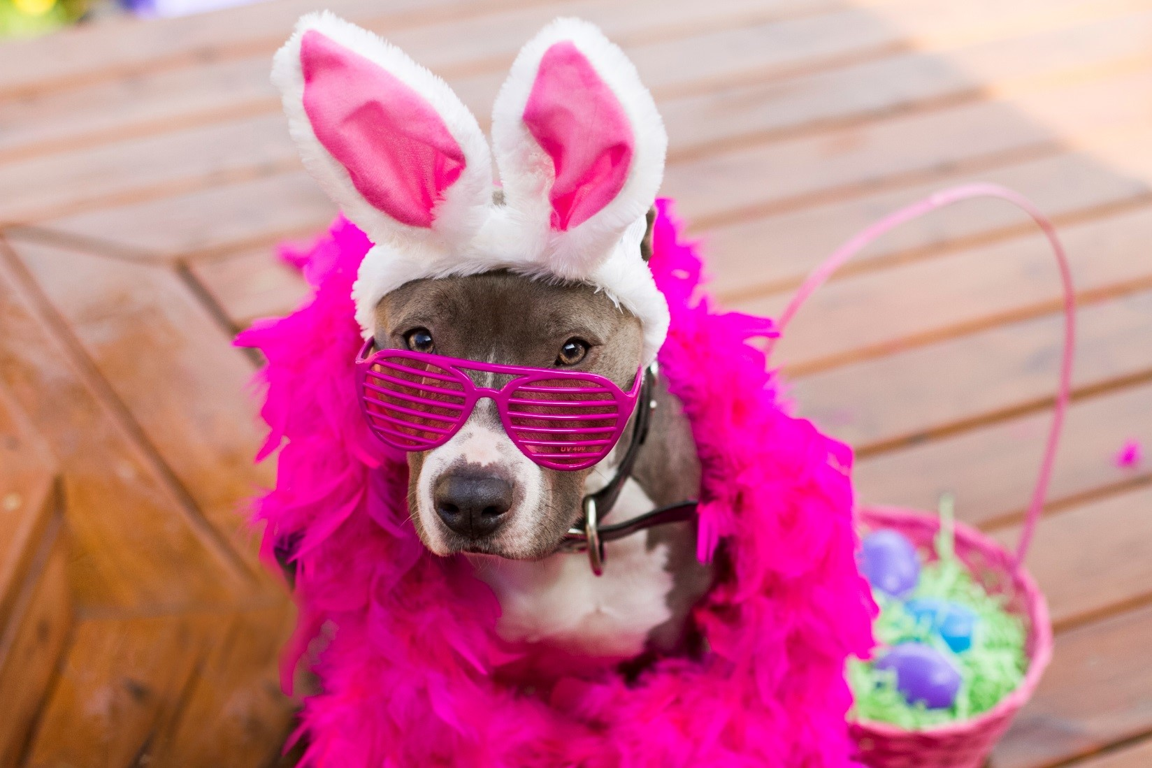 Easter And Pets Information From Joint Animal Services