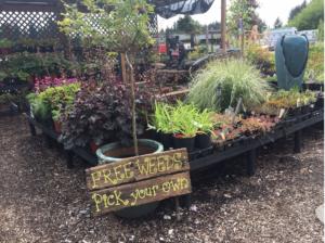 Ace Hardware garden center