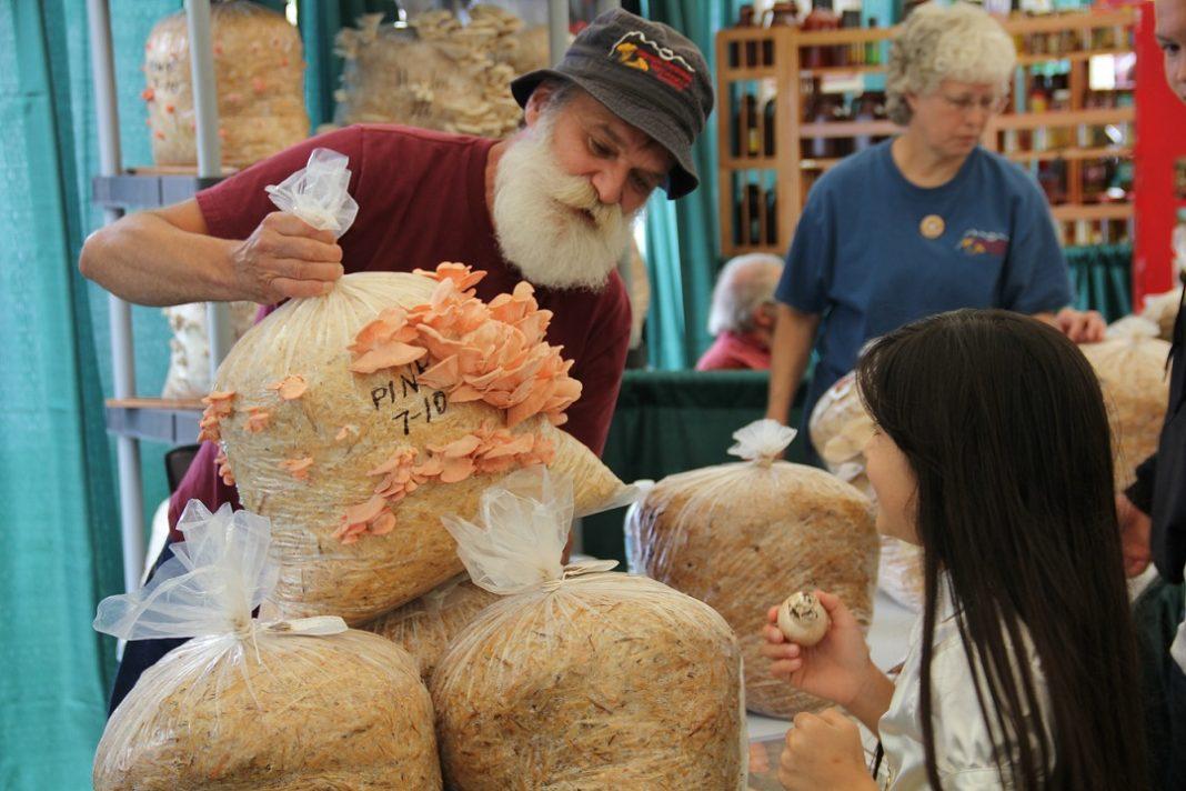 Mushroom festival lacey