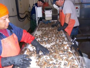 Little Skookum Shellfish Growers