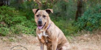 Adopt A Pet Dog of the Week Kiya
