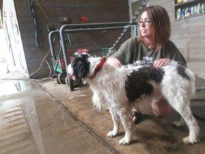 Sherman Valley Ranch dog boarding