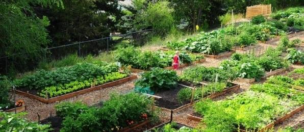 NTPS garden