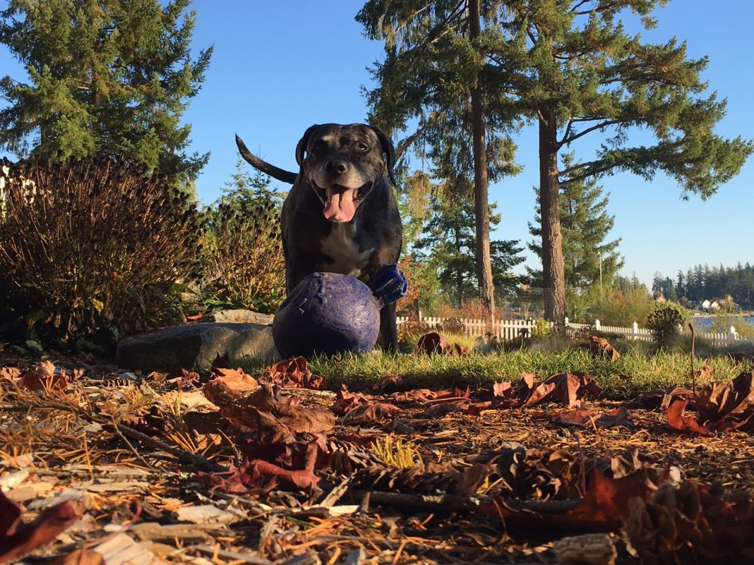 Fall dog in the leaves