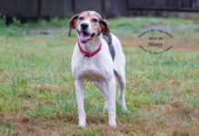 Adopt A Pet Featured Dog of the Week Mossy