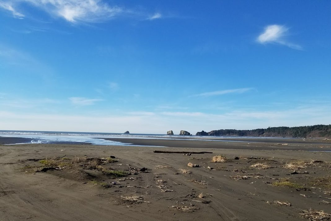 Beachcombing Grays Harbor