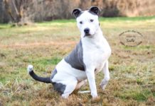 Adopt A Pet Dog of the Week Sadie Shelton