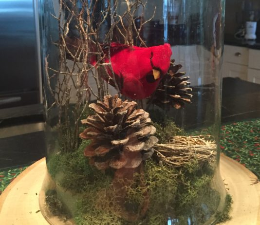 DIY Cloche Garden Winter cardinal