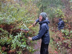 LBA Woods Volunteer Work Party @ LBA Park | Olympia | Washington | United States