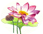 How to Grow a Lotus Blossom: Meditation as a Religious Act @ Lacey Timberland Library Meeting Room | Lacey | Washington | United States
