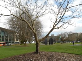 George Bush Butternut Tree Olympia WWII Memorial