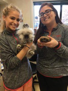Healthy Pets Feline Clinic Exotics