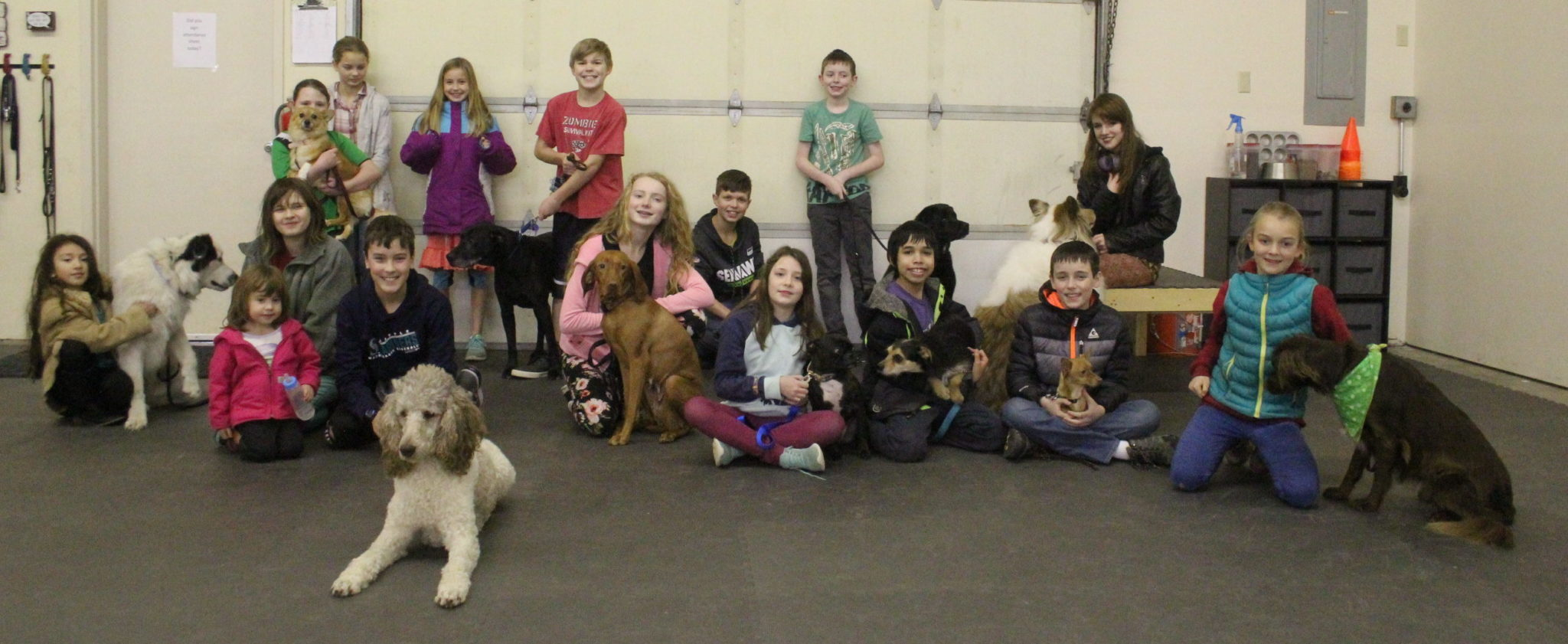 helping hounds 4H dogs
