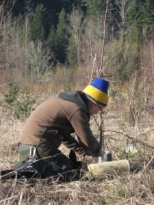 Tree Tube Removal @ Nisqually Land Trust