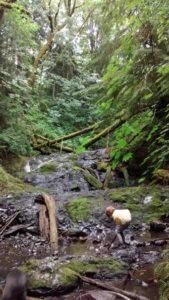 Playing at Hidden Falls