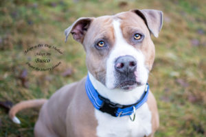 Adopt A Pet Dog of the Week Busco