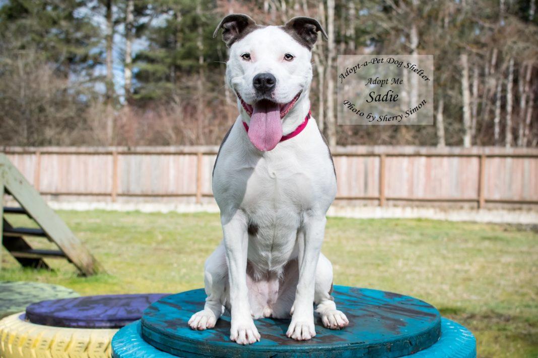 Adopt A Pet Dog of the Week Sadie