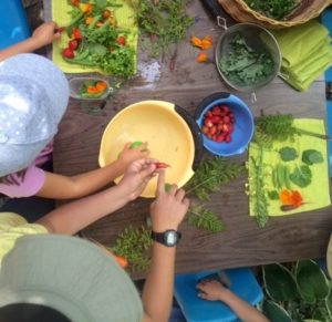 The Buzz on Bees Summer Camp @ Garden-Raised Bounty (GRuB) | Olympia | Washington | United States