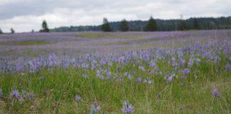 Black River - Mima Prairie Glacial Heritage Preserve