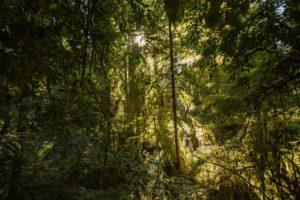Thurston County Trails