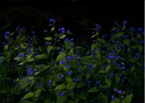Thurston County Wildflower Trails