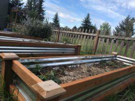 Urban Farming Thurston County