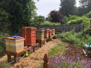 Panorama Pea Patch Bee Hives