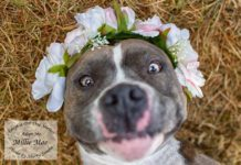 Adopt A Pet Dog of the Week Millie Mae