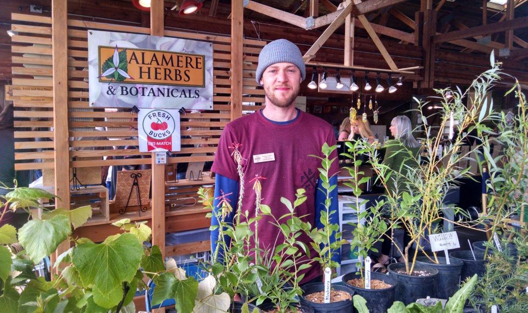 Olympia Farmers Market Alamere Herbs