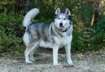 Adopt A Pet Kota Dog of the Week
