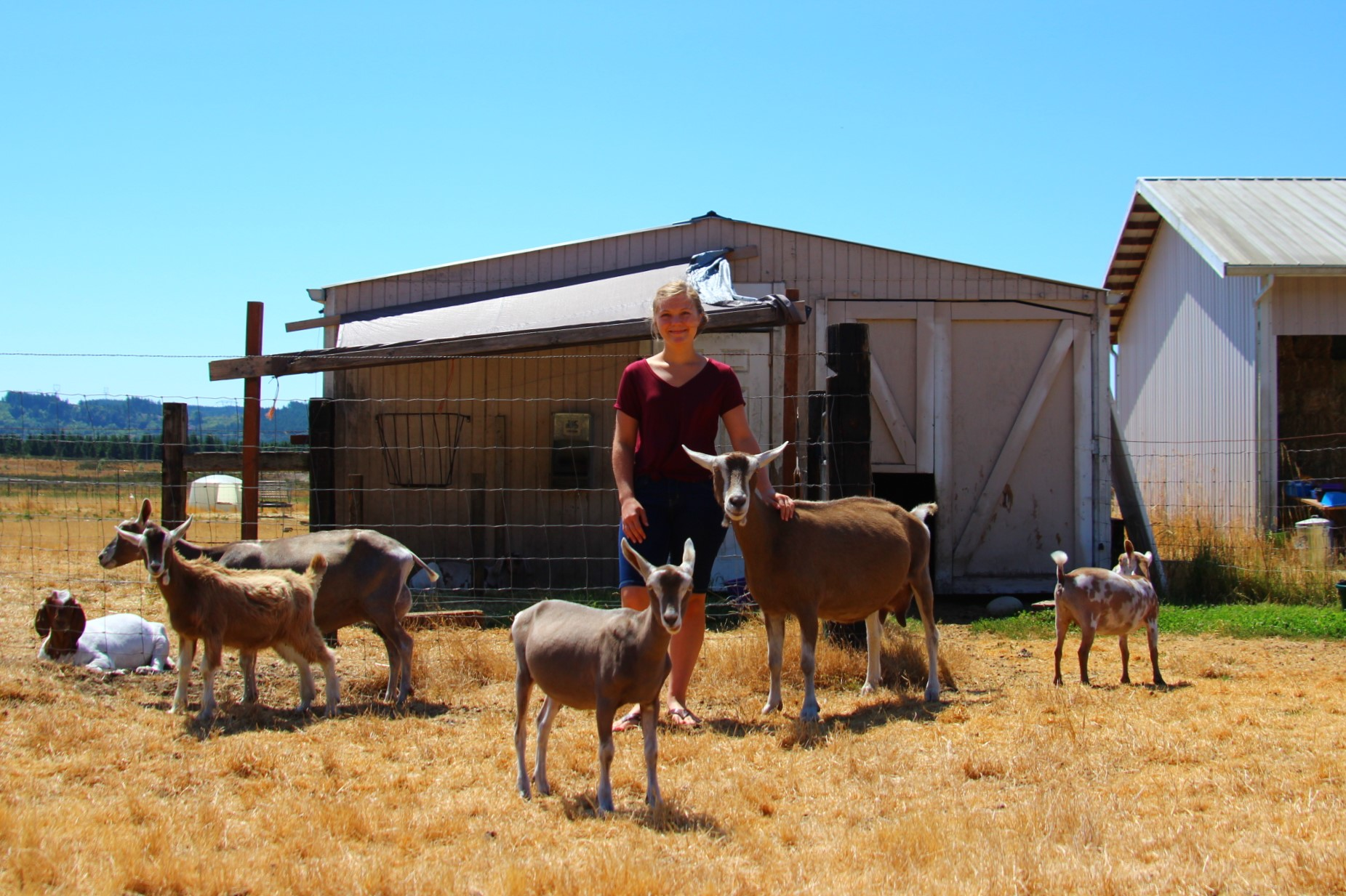 Thurston County Fair 4-H Lisa Chapman Goat Farm