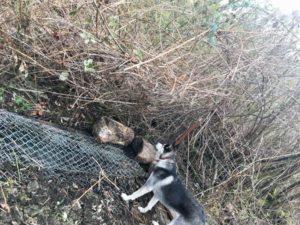 AJB Landscaping dog escape fence
