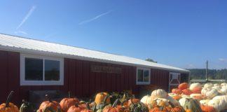 Schilter Family Farm pumpkins