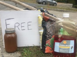 Free things in Olympia